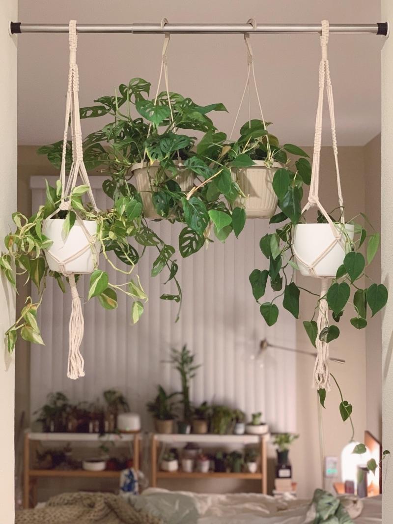 fixer sans percer des suspensions diy macramé plante verte monstera