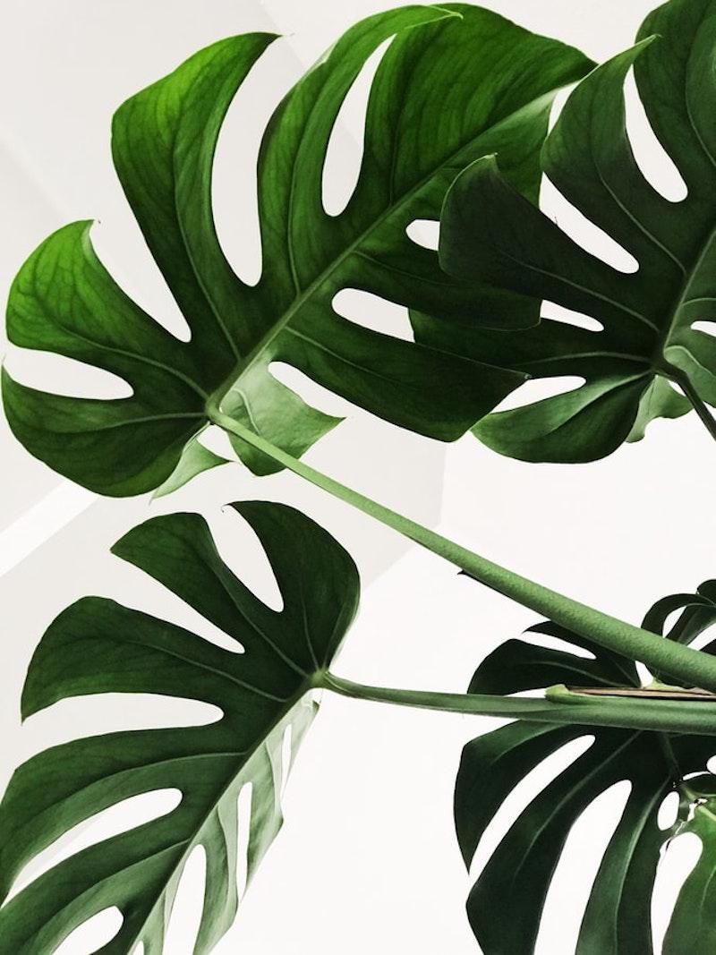 habillage mur intérieur pas cher avec de la végétation