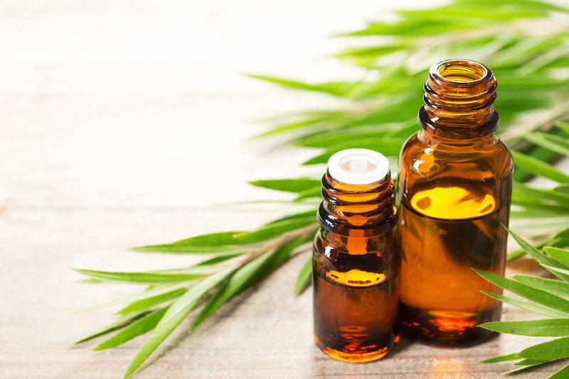 fresh tea tree leaves and essential oil