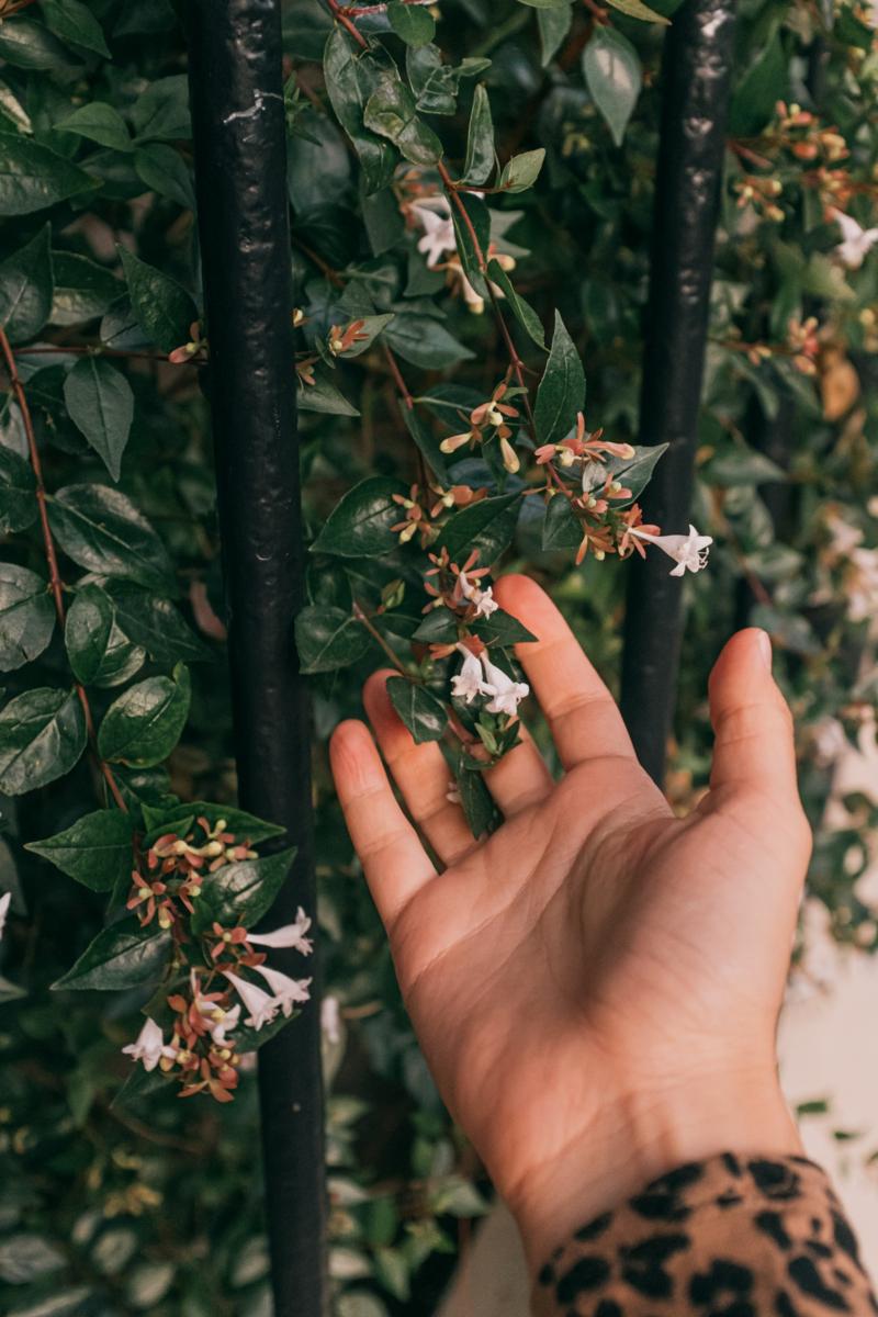 idee amenagement jardin le jasmin étoilé grimpnat comme une clôture