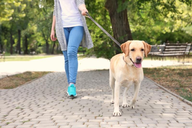 marcher pour maigrir une promenade avec le chien