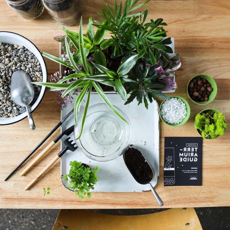 matériaux diy mini jardin bocal terrarium sol cailloux gravier mini plantes