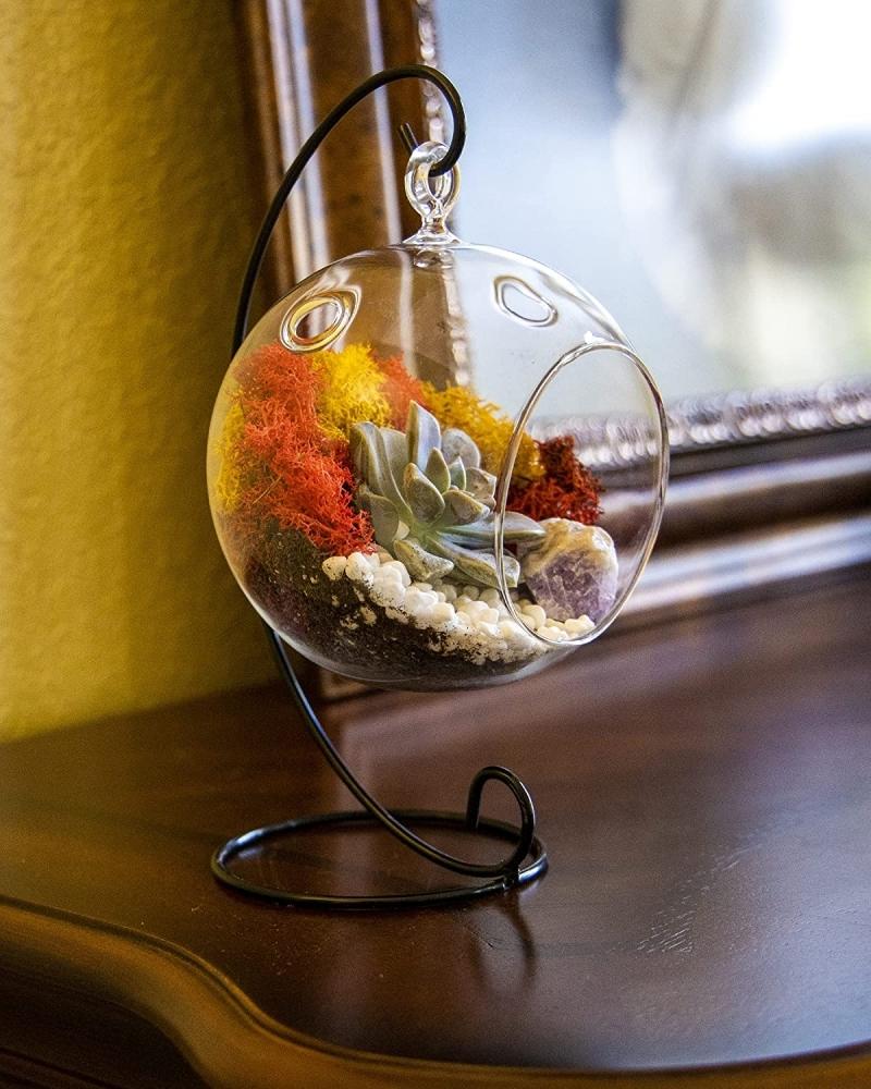 mini jardin contenant en verre rond diy terrarium aux plantes grasses