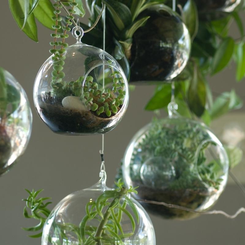 mini plante grasse diy terrarium suspendu verre ouvert rond