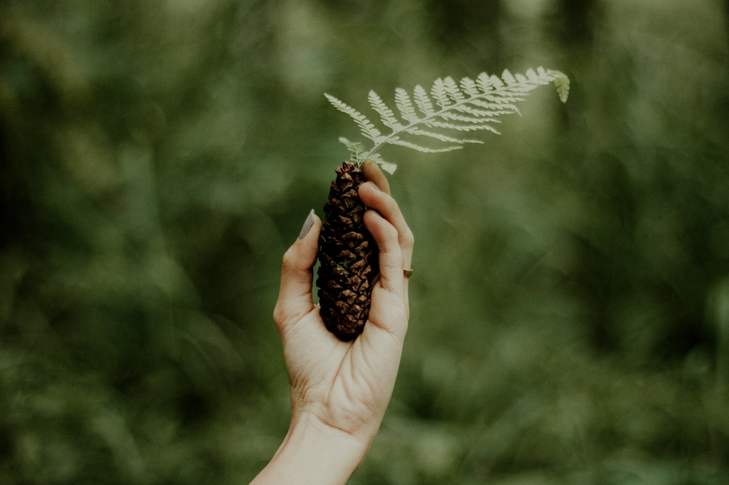 ongle kaki une main à ongles kaki qui tient un cône de pin