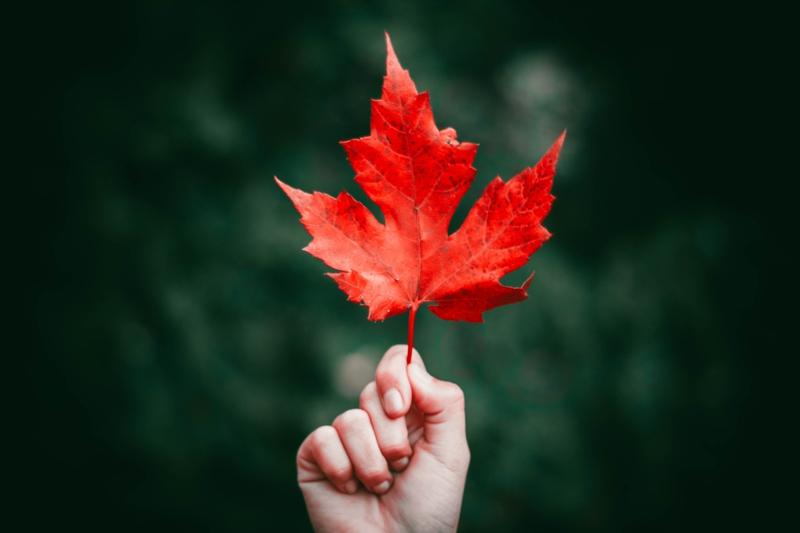 ongle rouge mat feuilles rouges d automne