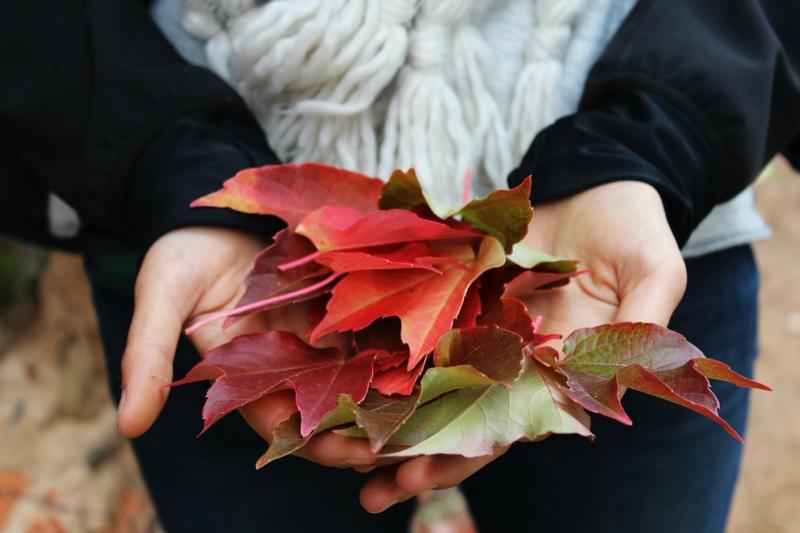 ongle rouge mat les feuilles multicolores de l automne