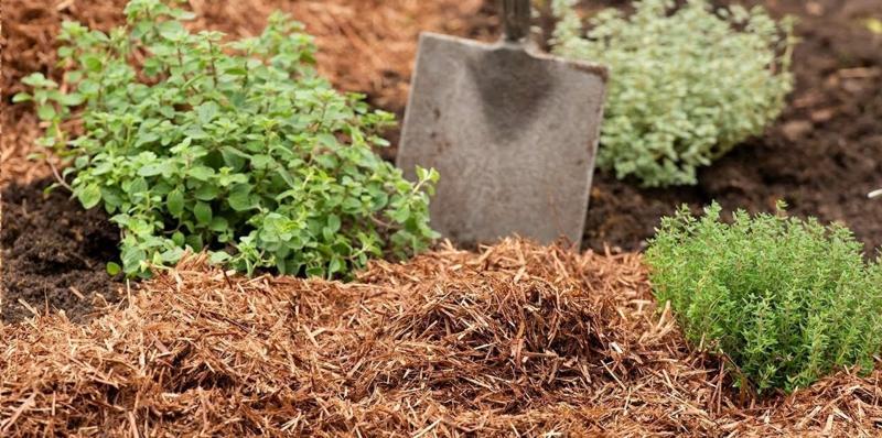 paillage de jardin pailler le jardin par un matériau organique