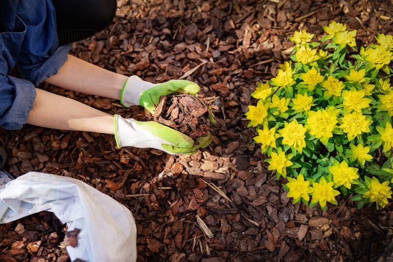 paillage de jardin pour enlever les mauvaises herbes desherbant puissant fait maison