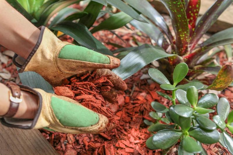 paillage naturel copeaux de bois rouges pour le jardin