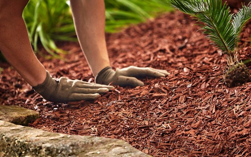 paillage naturel tasser le paillage de copeaux de bois