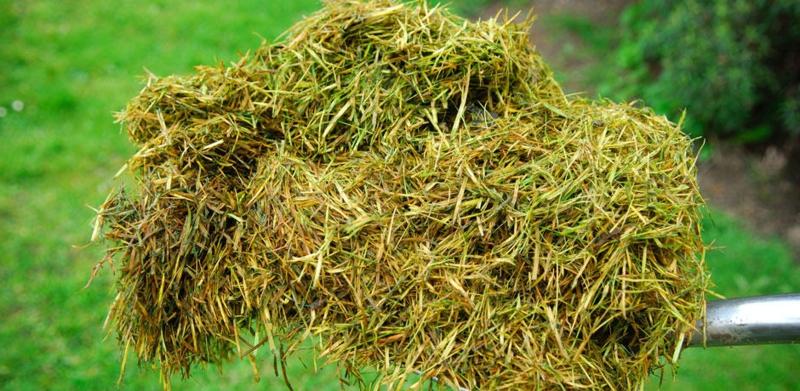 paillage potager herbe coupée et séchée pour paillage