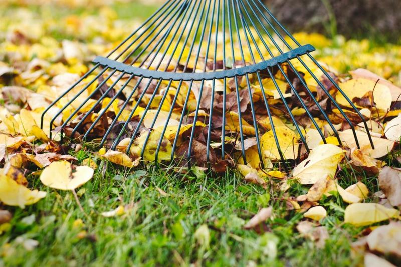 paillage végétal ramasser les feuilles mortes avec un râteau