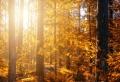 Ongles en couleurs d'automne 2021 – en harmonie avec la nature !
