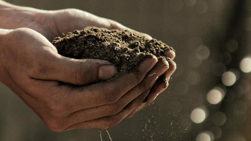 plantation pivoine un homme qui tient du terreau dans ses mains