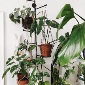 Suspendre plantes sans percer : 8 astuces simples et pratiques à piquer