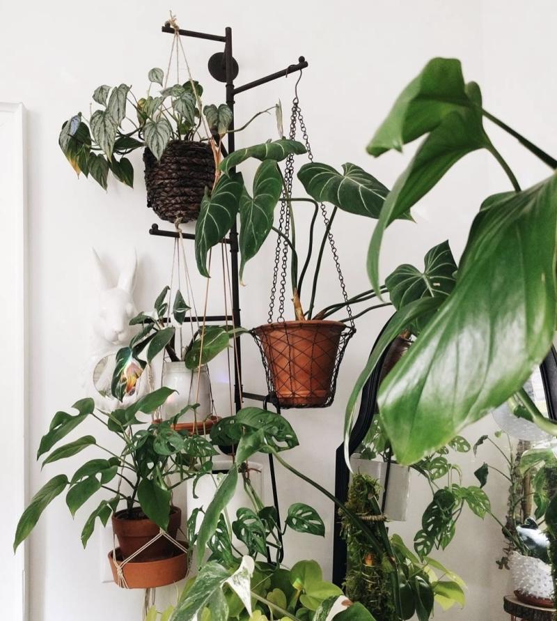 plante d intérieur tombante porte manteau recyclage peinture noire