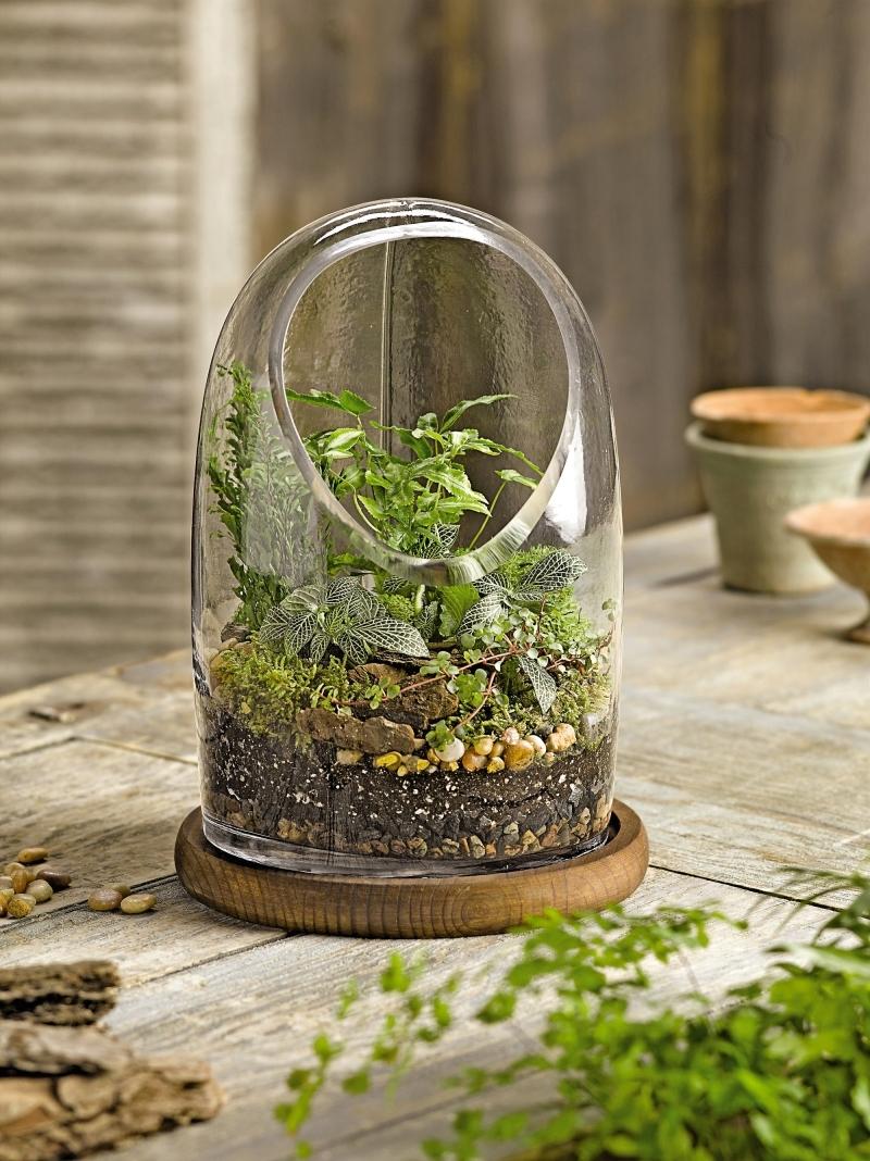 plante en bocal conseils fabrication jardin en terrarium ouvert