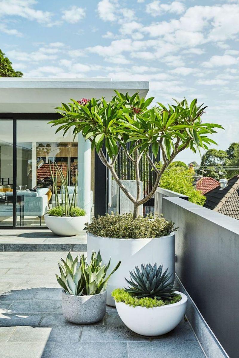 plante extérieure en pot sans entretien terrasse