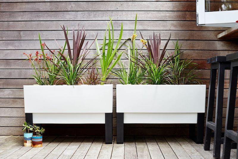 plante exterieur en pot resistant au gel jardinières blanches