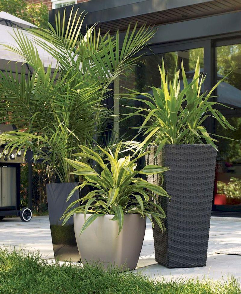plante exterieur plein soleil palmiers grands pots