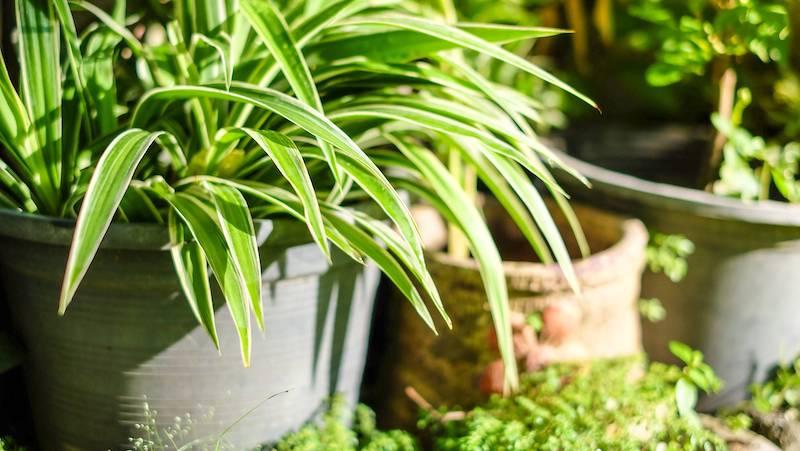 plante exterieur resistant au gel et au soleil