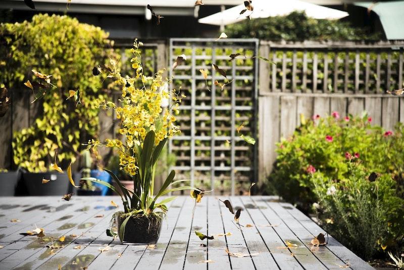 plante fleuri fleurs jaunes plante pose sur le sol en planches dans le jardin