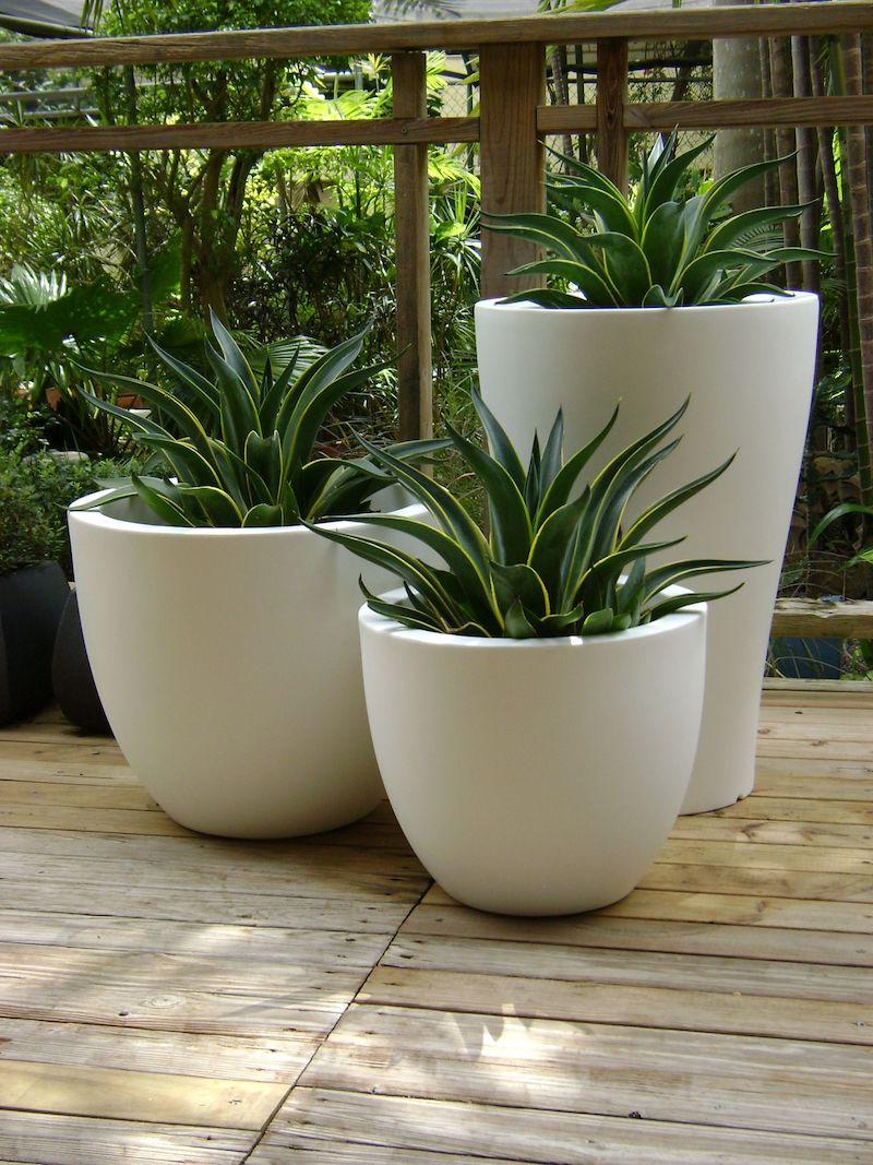 plante grasse exterieur sans entretien agave en pot