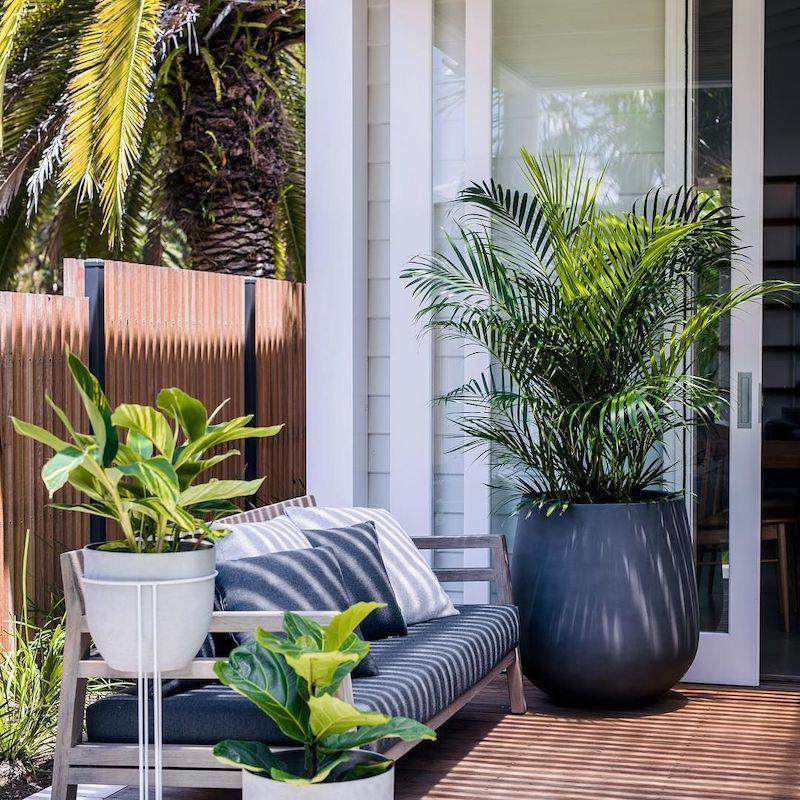 plante increvable exterieur palmier sur la terrasse