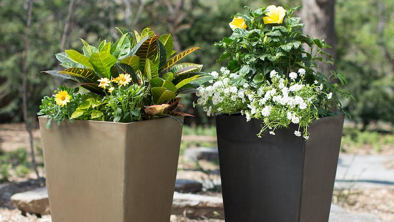 plante plein soleil sans arrosage à fleurs