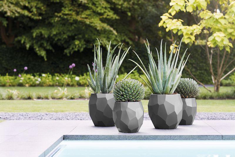 plante qui résiste au froid et à la chaleur plante grasse
