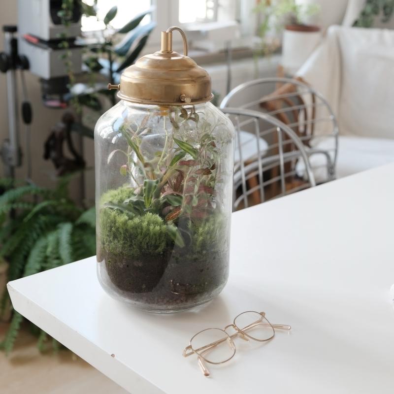 plante sous cloche conseils entretien et fabrication jardin mini bocal