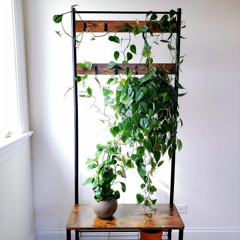 plante tombante intérieur meuble de rangement vertical planche cadre métal