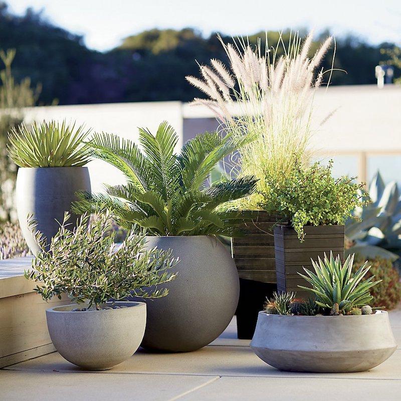 Choisir la bonne plante extérieure en pot sans entretien pour gagner du temps