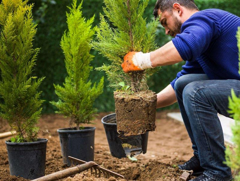 planter des arbustes persistants que planter en septembre astuces jardin