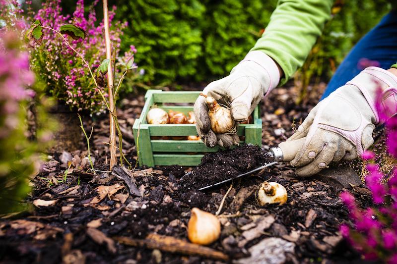 planter des bulbes de fleurs fleurs d automne que planter en septembre