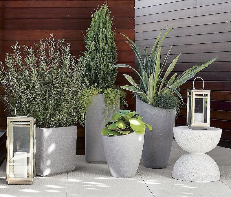 plantes d extérieur pour terrasse jolie déco