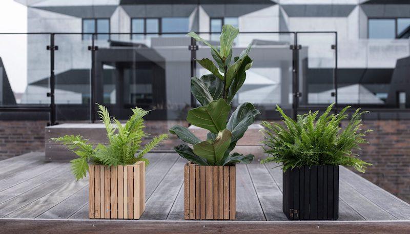 plantes plein soleil sans arrosage pots carrés