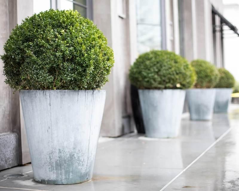 plantes pour jardiniere toute l année arbustes en pots