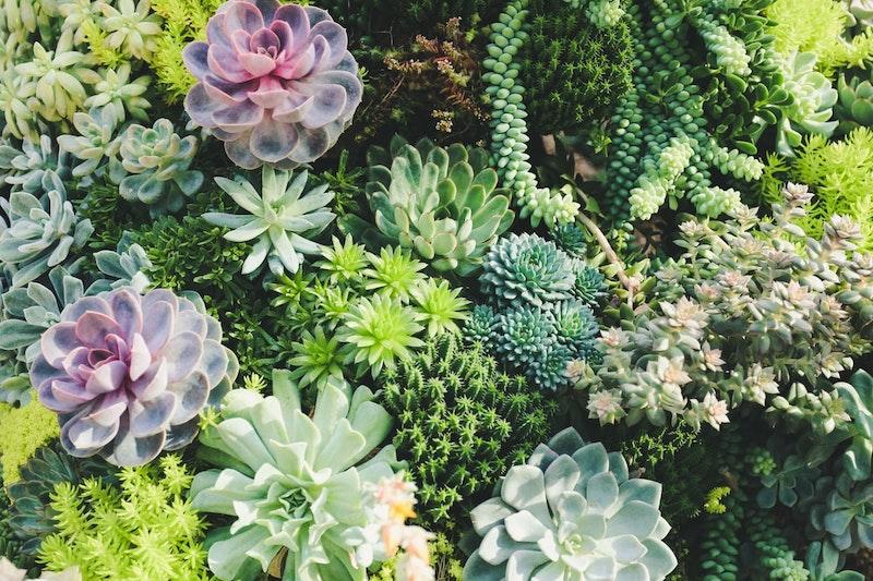 Profiter de son jardin avec les bons aménagements