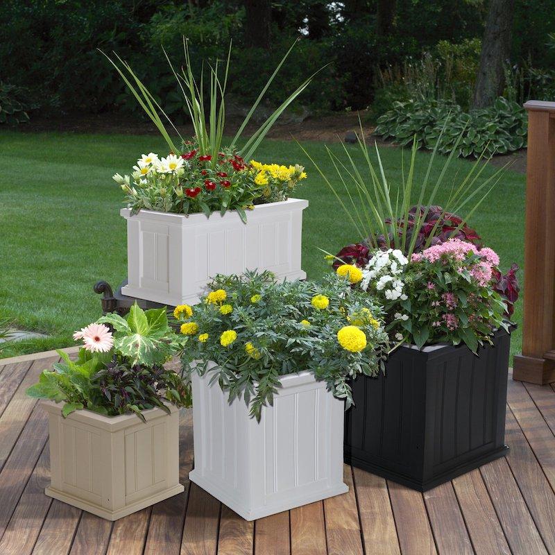 plantes supportant secheresse et chaleur fleuries