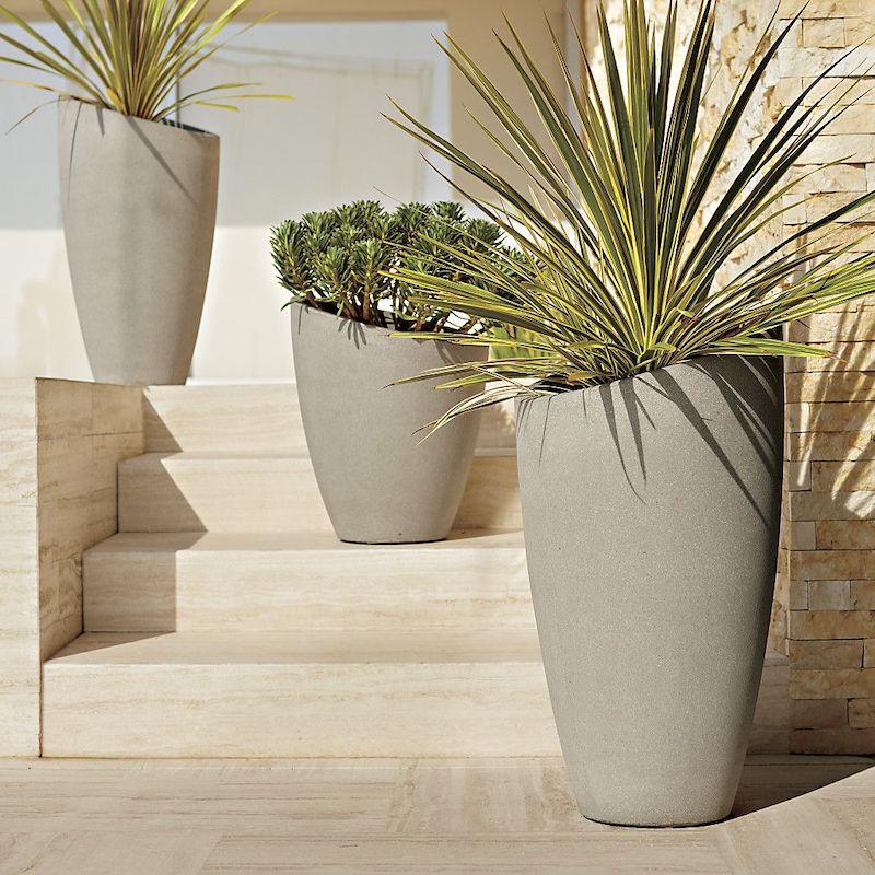 plantes supportant secheresse et chaleur palmiers