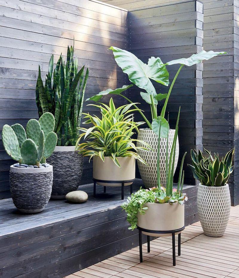 plantes supportant secheresse et chaleur pots en formes differentes