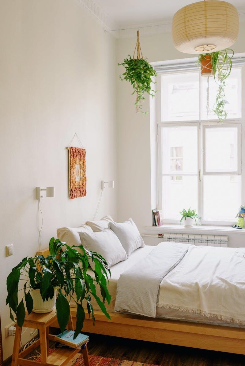 plusieurs plantes dans une chambre cocooning orientale originale