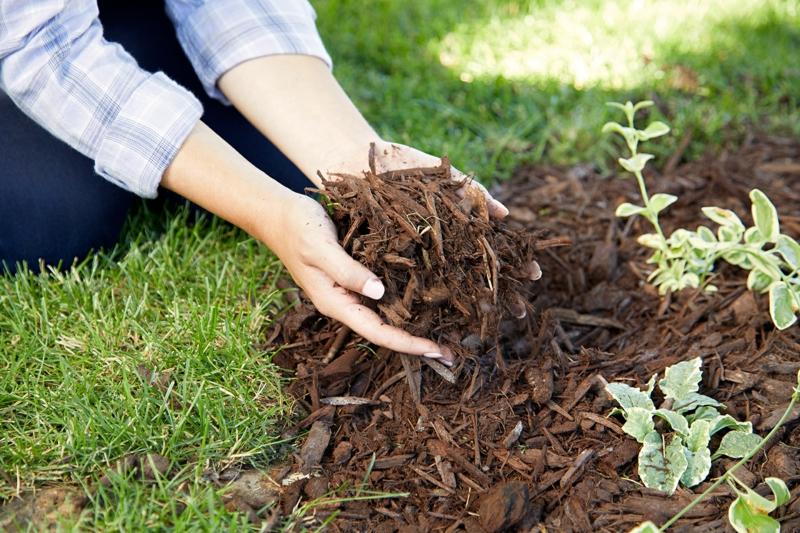 que mettre au sol pour éviter les mauvaises herbes
