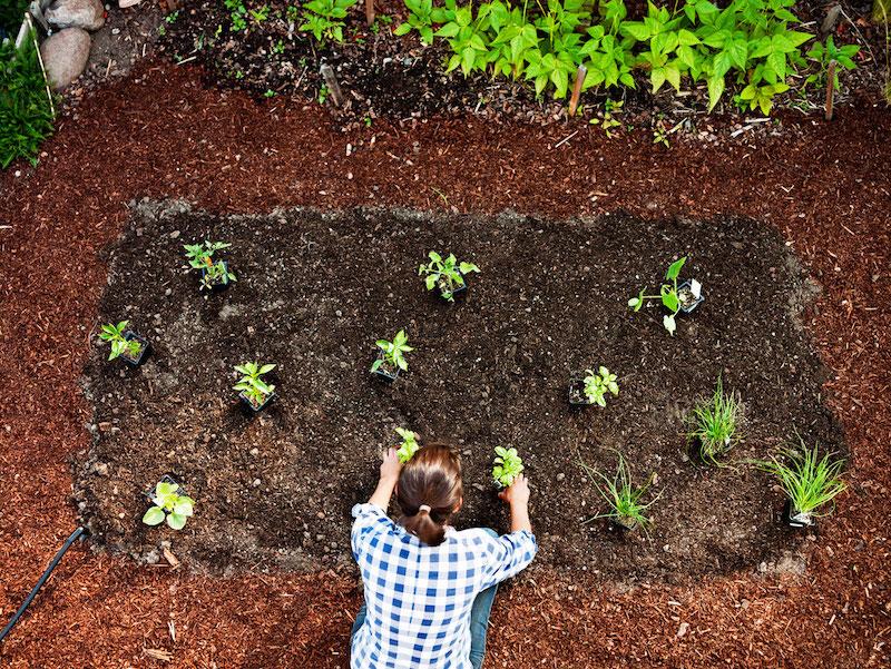 quel legume planter en septembre guide jardinage de debut d automne
