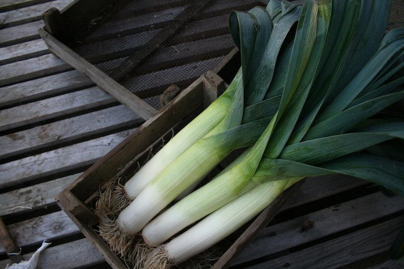 quel legume planter en septembre idées potager automne quoi mettre
