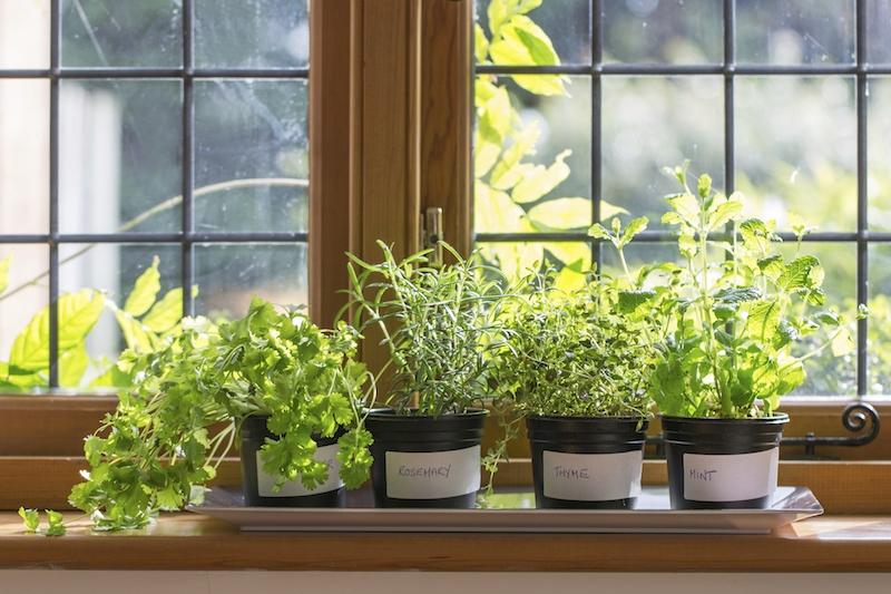 quelle plantation septembre idée de pots de fleurs avec des herbes fraiches vertes au soleil