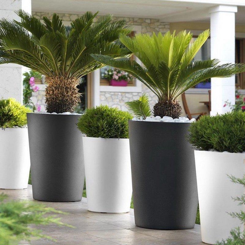 quelle plante mettre dans un grand pot exterieur