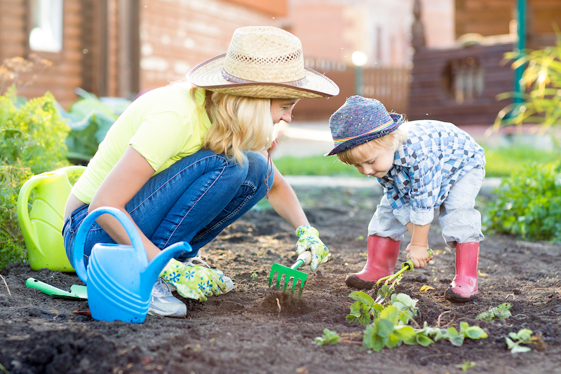 quoi planter en septembre fraisier guide du jardinier débutant